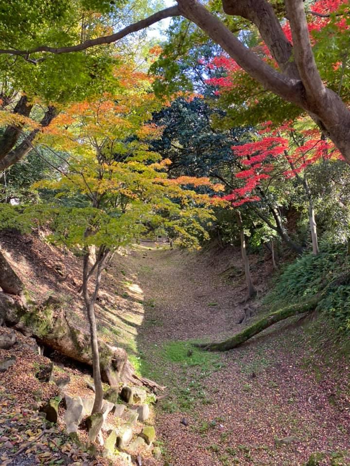 愛知県にある7つのお城まとめ(特徴~アクセス方法)まで分かりやすく紹介